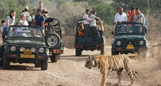 Wildlife Safari Tour in Ranthambore from Jaipur
